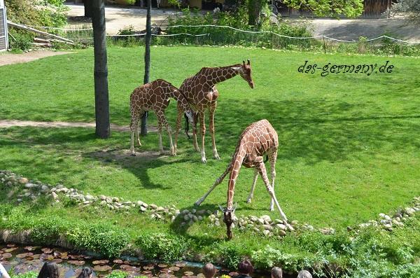про животных на немецком языке