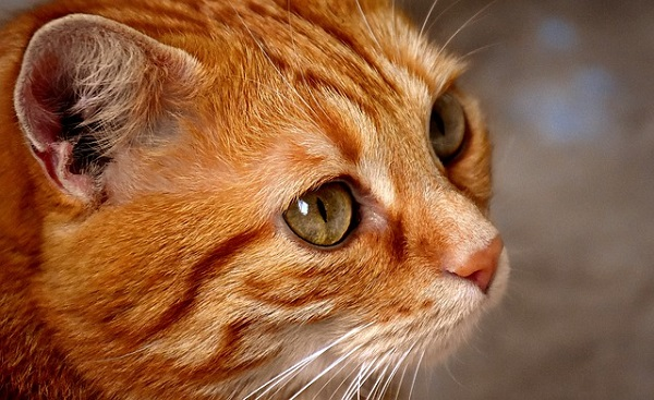 Немецкий кот и похмелье