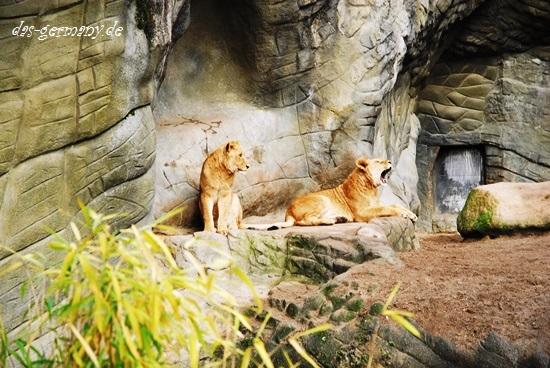 Зоопарк в Германии