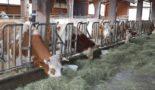 молоко в Германии